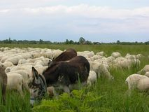 Animalfarm del campo de Toscana Fotografía de archivo