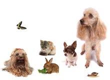 Animali Immagini Stock Libere da Diritti