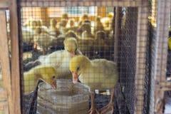 animali Fotografia Stock Libera da Diritti