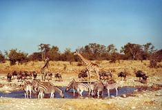 Animali Fotografia Stock
