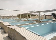 Animali acquatici Agricoltura del calcestruzzo del gamberetto Immagine Stock Libera da Diritti