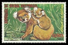 Animali australiani, koala Immagini Stock Libere da Diritti