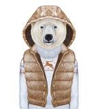 Animali come essere umano L'orso polare in giù conferisce a e maglione Immagine Stock