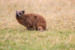 Animali in cratere di Ngorongoro Fotografie Stock