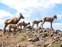 Animali curiosi Fotografia Stock