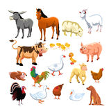 Animali da allevamento Fotografie Stock