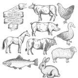 Animali da allevamento impostati Immagini Stock