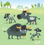 Animali da allevamento: insieme della mucca Fotografia Stock Libera da Diritti