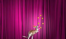 Animali da circo Fotografia Stock Libera da Diritti