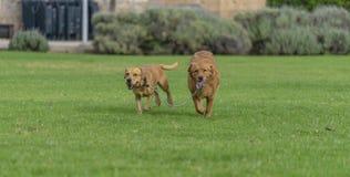 animali da compagnia, cani fotografia stock