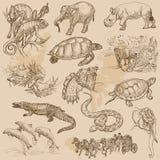 Animali da soma disegnati a mano di un vettore Fotografia Stock