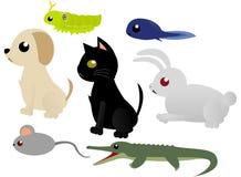 Animali del bambino Fotografia Stock