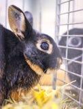animali del coniglietto Fotografia Stock