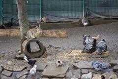 Animali del cortile dal monastero di Caraiman Fotografia Stock Libera da Diritti