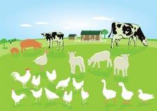 Animali del cortile in un campo Fotografie Stock