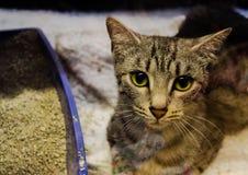 animali del gatto Fotografie Stock
