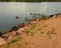 Animali del lago Fotografia Stock
