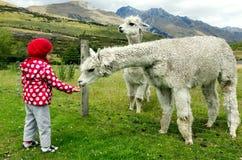 Animali dell'alimentazione della bambina Fotografie Stock Libere da Diritti