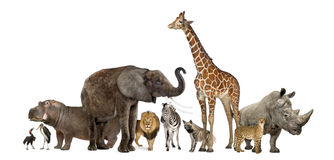 Animali della fauna selvatica, isolati su bianco fotografia stock libera da diritti