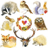 Animali della foresta dell'acquerello messi Fotografia Stock Libera da Diritti