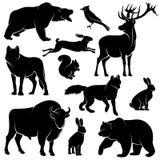 Animali della foresta di vettore per progettazione di legno Raccolta di zoologia Immagini Stock