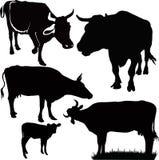Animali della mucca Immagini Stock