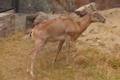 Animali dello zoo Immagini Stock