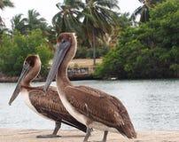 Animali di Cuba fotografia stock libera da diritti