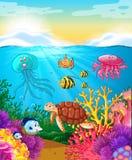 Animali di mare che nuotano sotto l'oceano Fotografie Stock Libere da Diritti