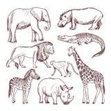 Animali differenti del savana e dell'Africa royalty illustrazione gratis
