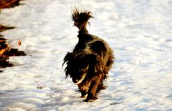 Animali domestici Immagini Stock Libere da Diritti