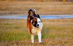 Animali domestici Fotografia Stock