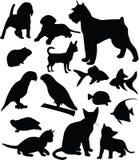 Animali domestici Fotografie Stock