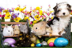 Animali domestici con le uova di Pasqua su priorità bassa bianca Immagine Stock
