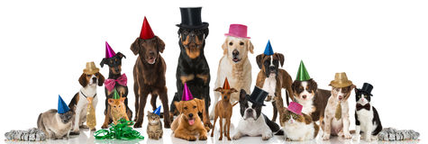 Animali domestici del partito Fotografia Stock Libera da Diritti
