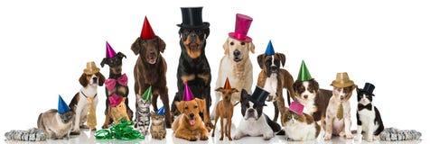 Animali domestici del partito Immagine Stock