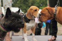 Animali domestici di festa Fotografia Stock