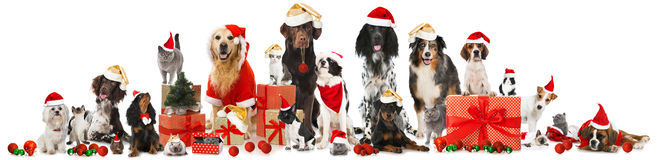 Animali domestici di Natale immagine stock