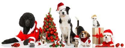 Animali domestici di Natale Immagine Stock Libera da Diritti