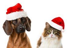 Animali domestici di Natale Immagine Stock