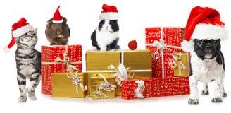 Animali domestici di Natale Fotografia Stock Libera da Diritti