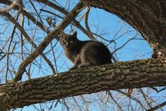 Animali domestici, gatto grigio, cielo blu, animali, sotto il cielo aperto Immagine Stock