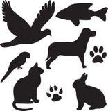 Animali domestici nazionali Immagine Stock