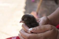 Animali ed esseri umani fotografie stock libere da diritti