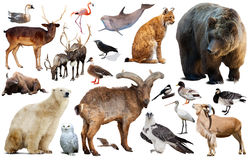 Animali europei isolati Immagini Stock Libere da Diritti