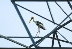 Animali/fauna selvatica fotografia stock libera da diritti