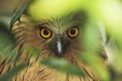 Animali/fauna selvatica immagini stock