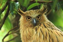 Animali/fauna selvatica fotografie stock libere da diritti