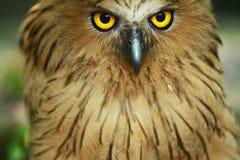 Animali/fauna selvatica fotografie stock