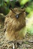Animali/fauna selvatica immagine stock libera da diritti